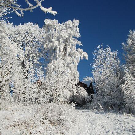 winter, frost, ice, Fujifilm FinePix AV100