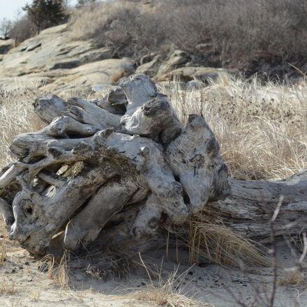 driftwood, Nikon D5200