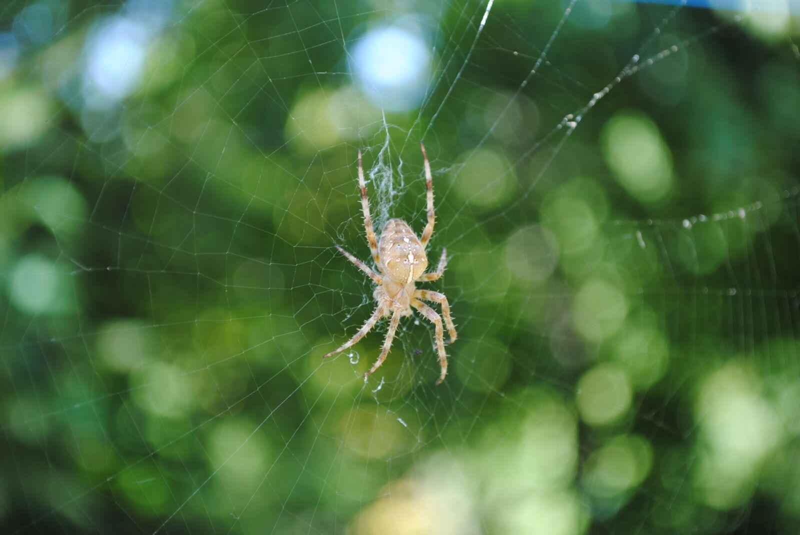 "Nikon D3000 sample photo. ""Arthropoda, spider, fauna"" photography"