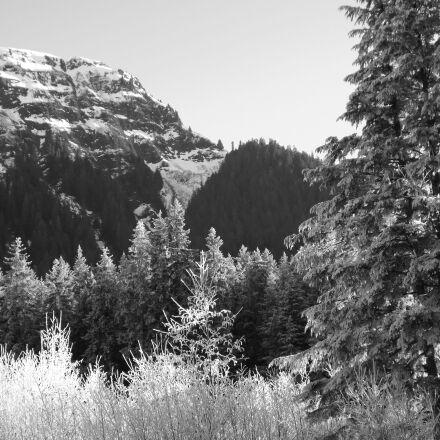 winter, frozen trees, frozen, Fujifilm FinePix S4500