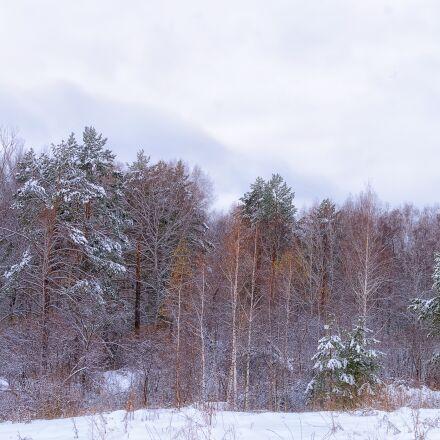 forest, snow, cloud, Pentax K-500