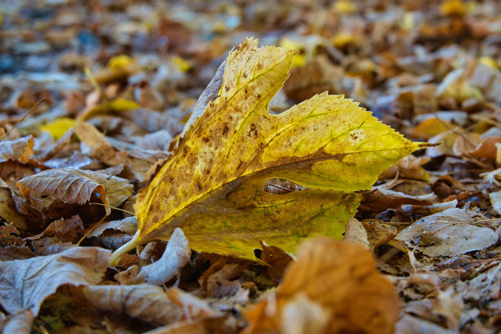 """Sony a6400 sample photo. """"Leaves, autumn, forest floor"""" photography"""