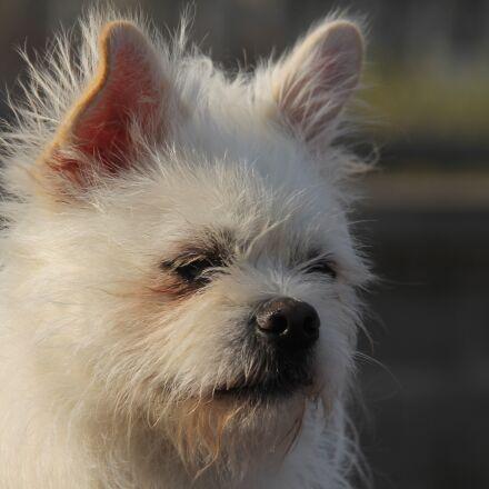 pets, diudiu, the user-le, Canon EOS 1100D