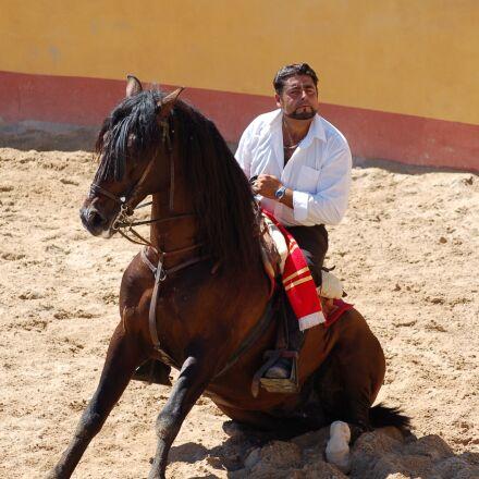 horse, horseman, rider, show, Nikon D50