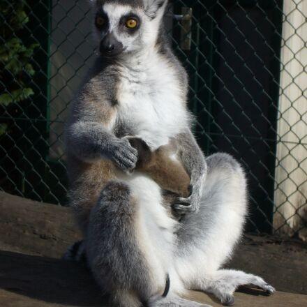 mammals, cute, primates, Panasonic DMC-LS2