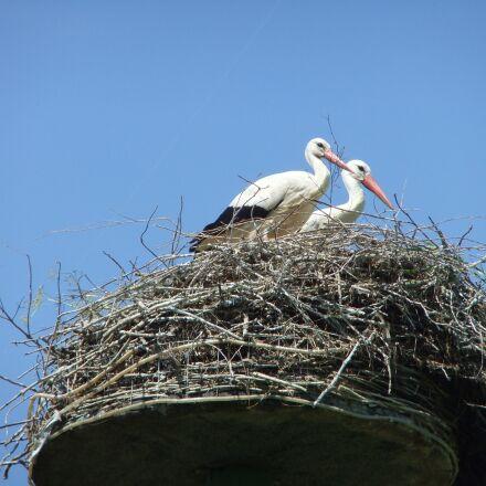 stork, netherlands, nature, Fujifilm FinePix F70EXR