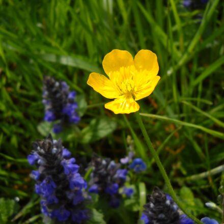 alps brown, flower, yellow, Nikon COOLPIX L19