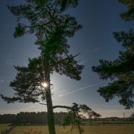 tree, sun, sunny, Fujifilm X-T2