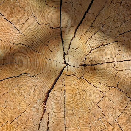 wood, tribe, annual rings, Nikon COOLPIX P300