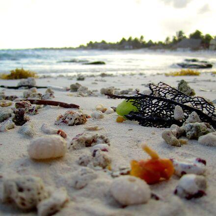 beach, shells, shore, Canon POWERSHOT SD1400 IS