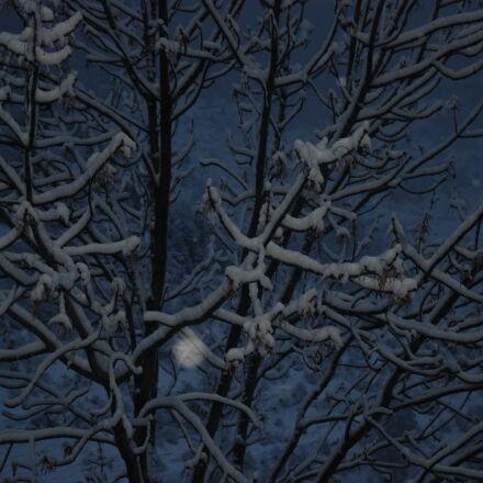 arbre, amb, neu, hivern, Nikon D80