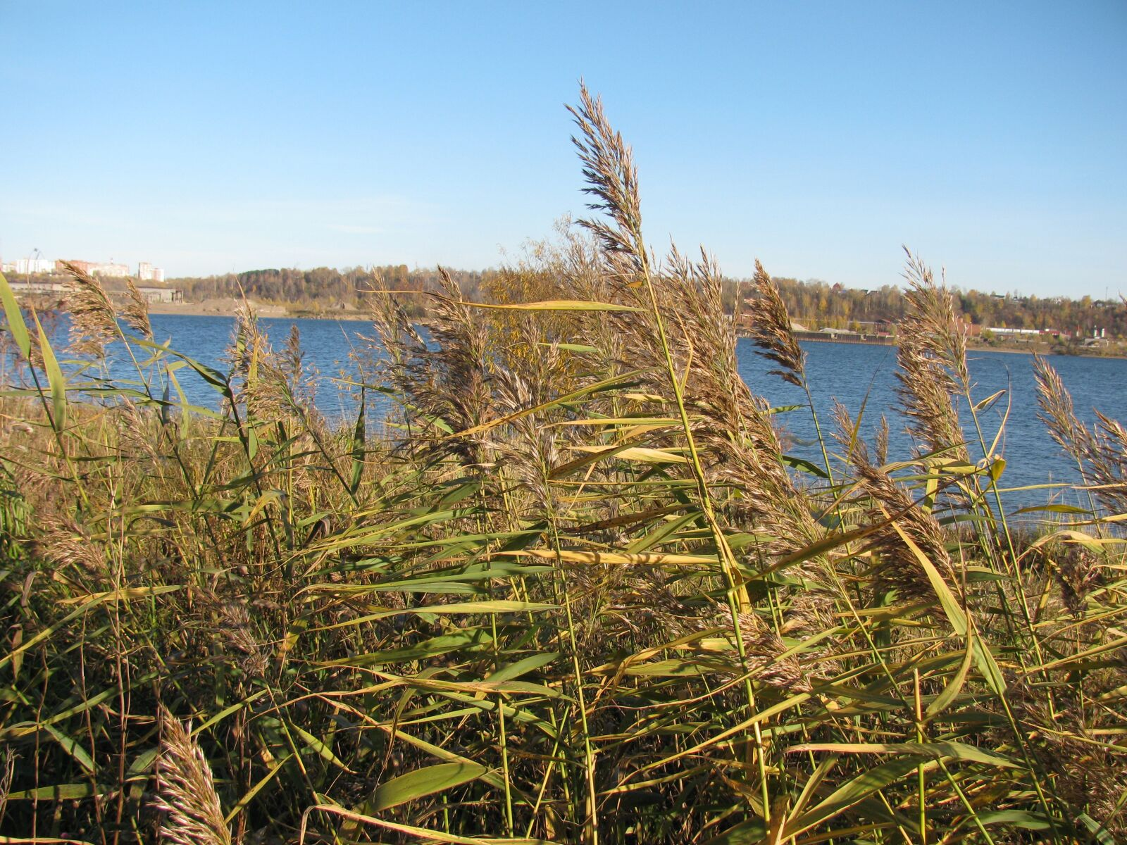 """Canon PowerShot SX110 IS sample photo. """"Autumn, river, water"""" photography"""