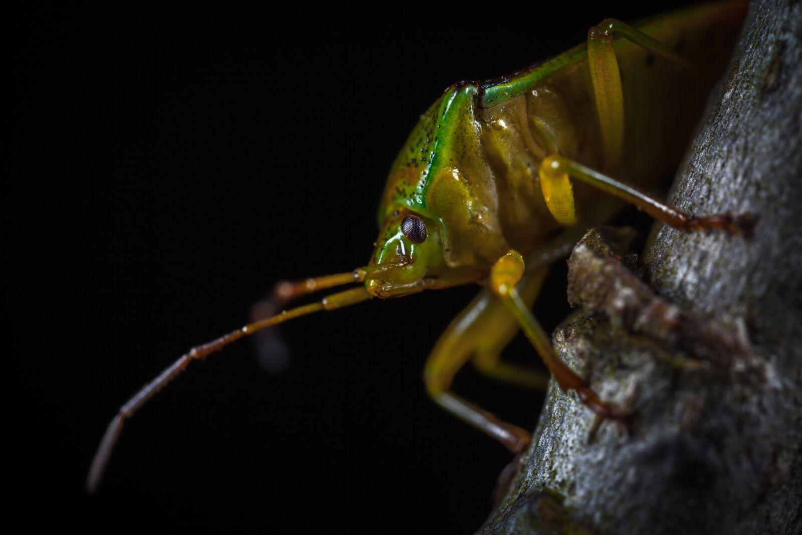 insect, bespozvonochnoe, living nature photography