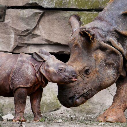 rhino, animals, emotions, Panasonic DMC-G70