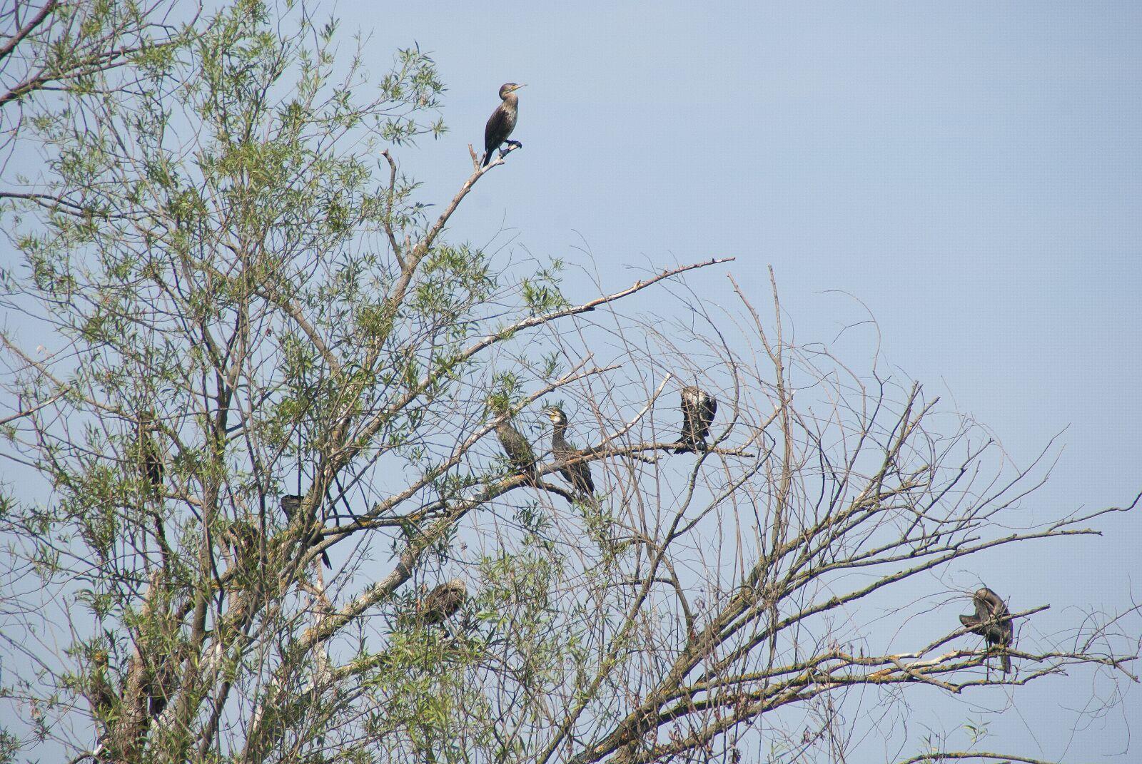 "Pentax K10D sample photo. ""Bird, nature, branch"" photography"