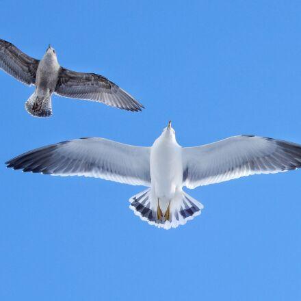 animal, blue sky, sea, Nikon COOLPIX A900