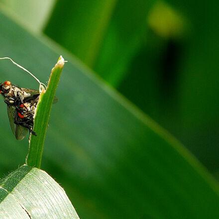 insect, Nikon D40X