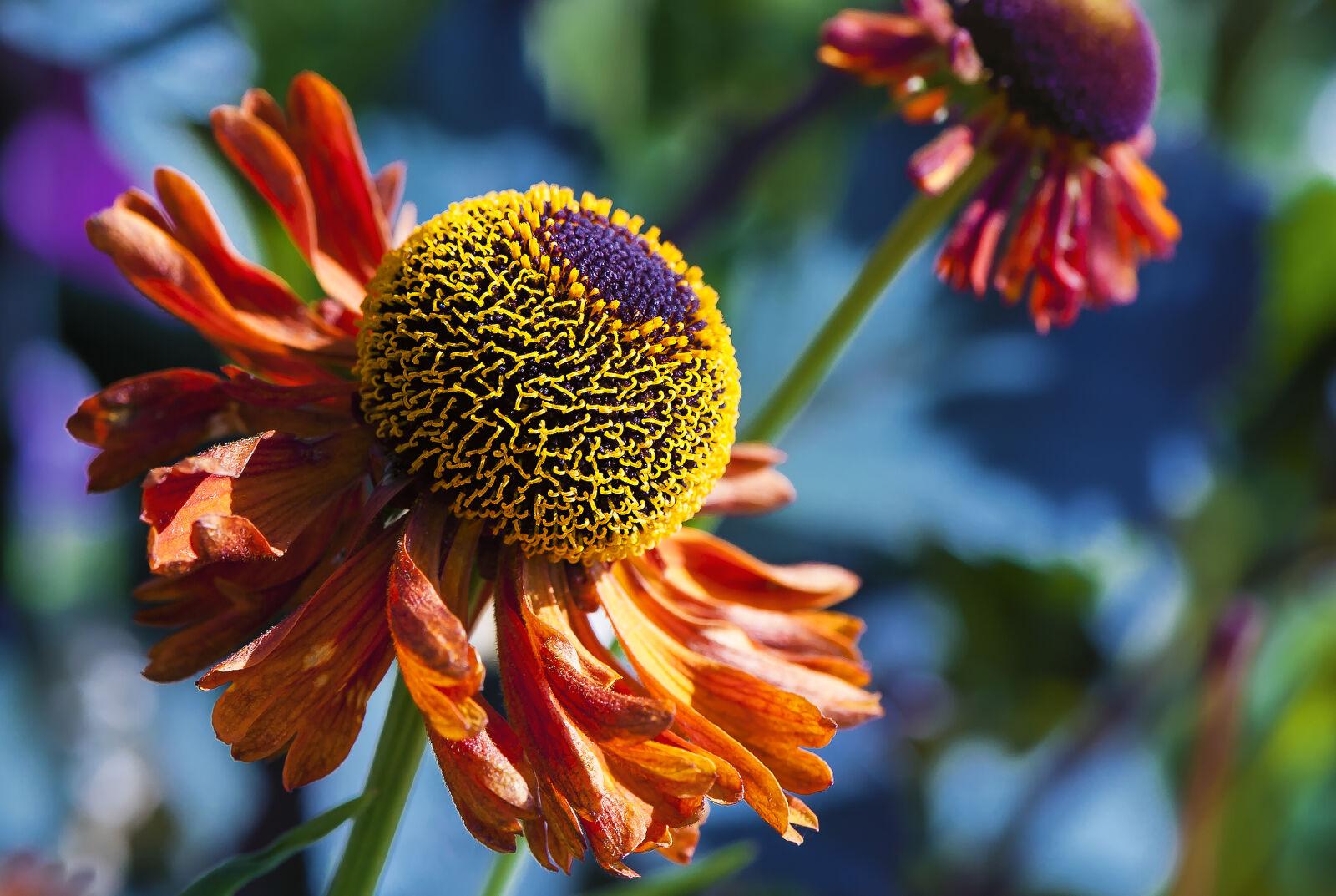 """Nikon D700 sample photo. """"Beautiful, flowers, close, up"""" photography"""