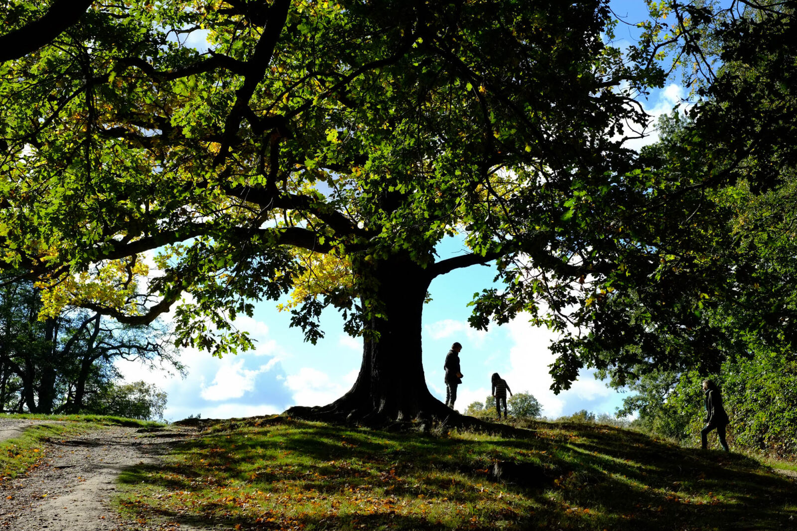 "Fujifilm X-Pro1 sample photo. ""Green, hampstead, heath, nature"" photography"