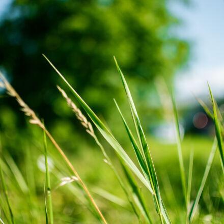 green, grass, during, daytime, Nikon D5500