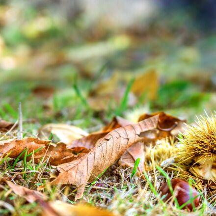 nature, seasons, autumn, Sony ILCE-6000