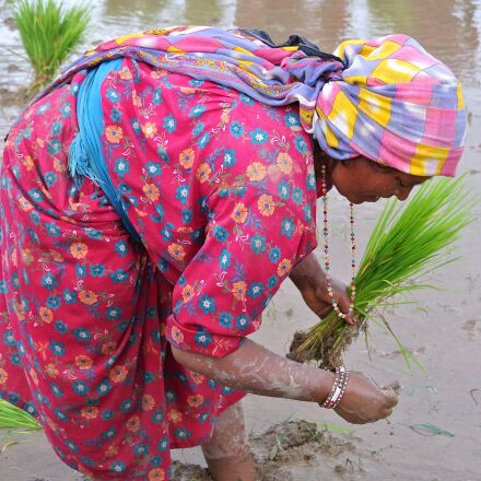 nepalese, woman, rice, Nikon 1 J1