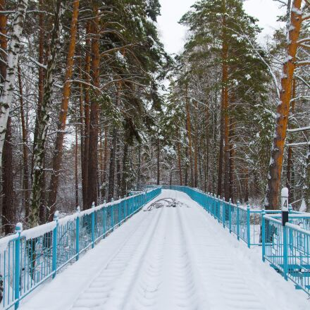 snow, railway, pine, Pentax K-500