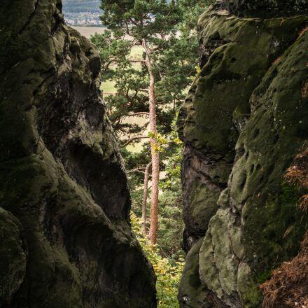 pine, rock, crevice, Samsung NX300M
