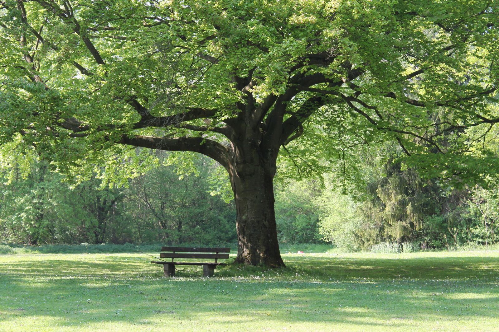 """Canon EOS 1100D (EOS Rebel T3 / EOS Kiss X50) sample photo. """"Tree, nature park, leaves"""" photography"""