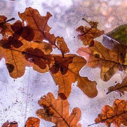 autumn, tree, leaves, Panasonic DMC-GM1