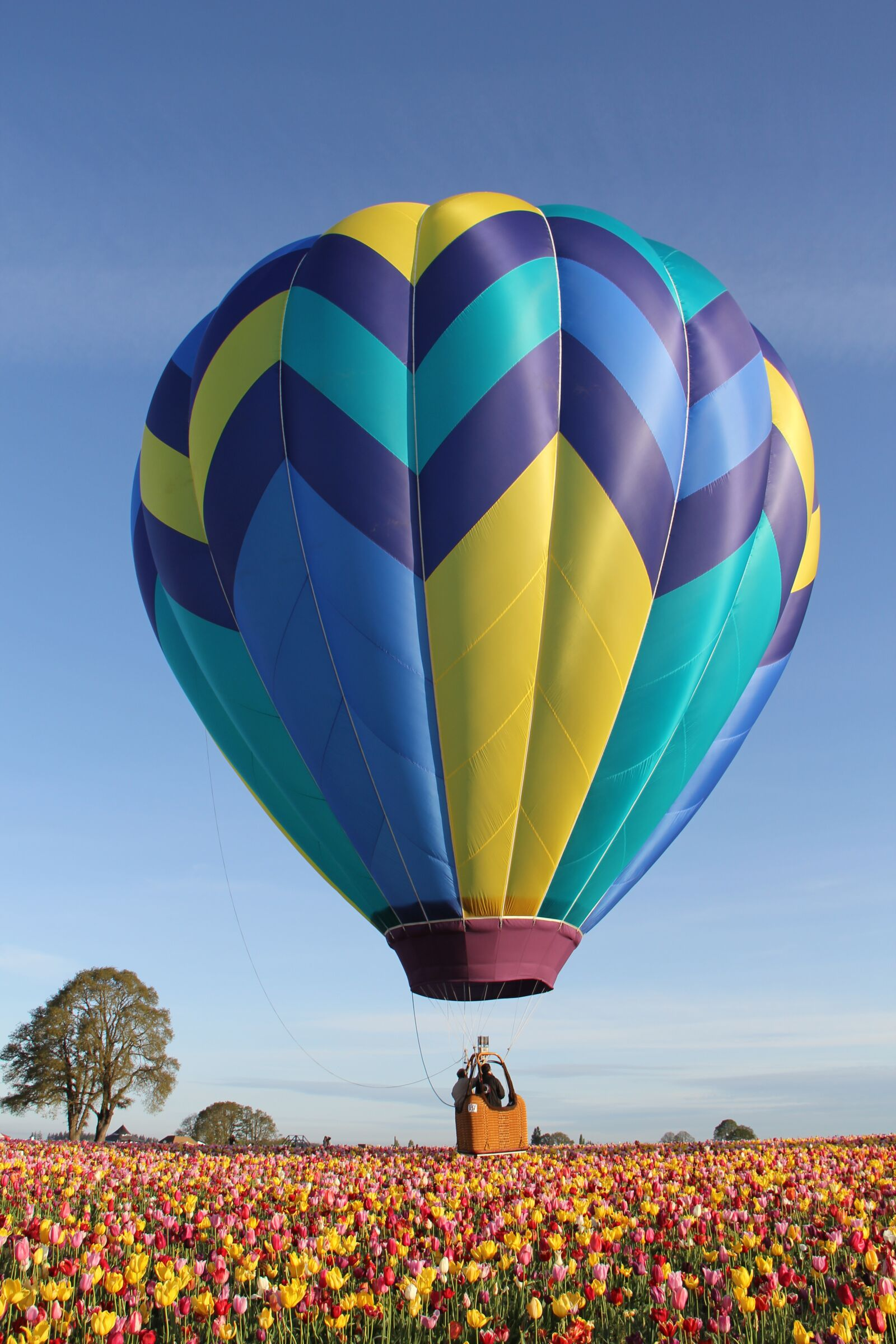 """Canon EOS 60D sample photo. """"Hot air balloon, tulips"""" photography"""