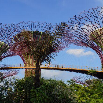 singapore, trees, bay, Sony SLT-A65