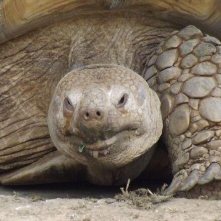 turtle, animals, zoo, Fujifilm FinePix S4500