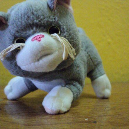 plush, cat, toy, table, Sony DSC-S2000