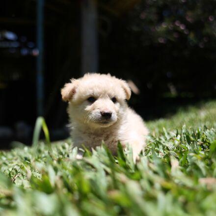 dog, puppy, cute, Canon EOS 6D