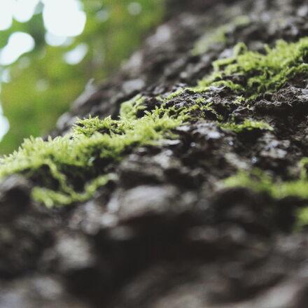 bark, tree, Canon EOS 100D