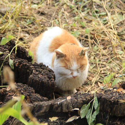 cat, sleep, the yard, Canon EOS 60D