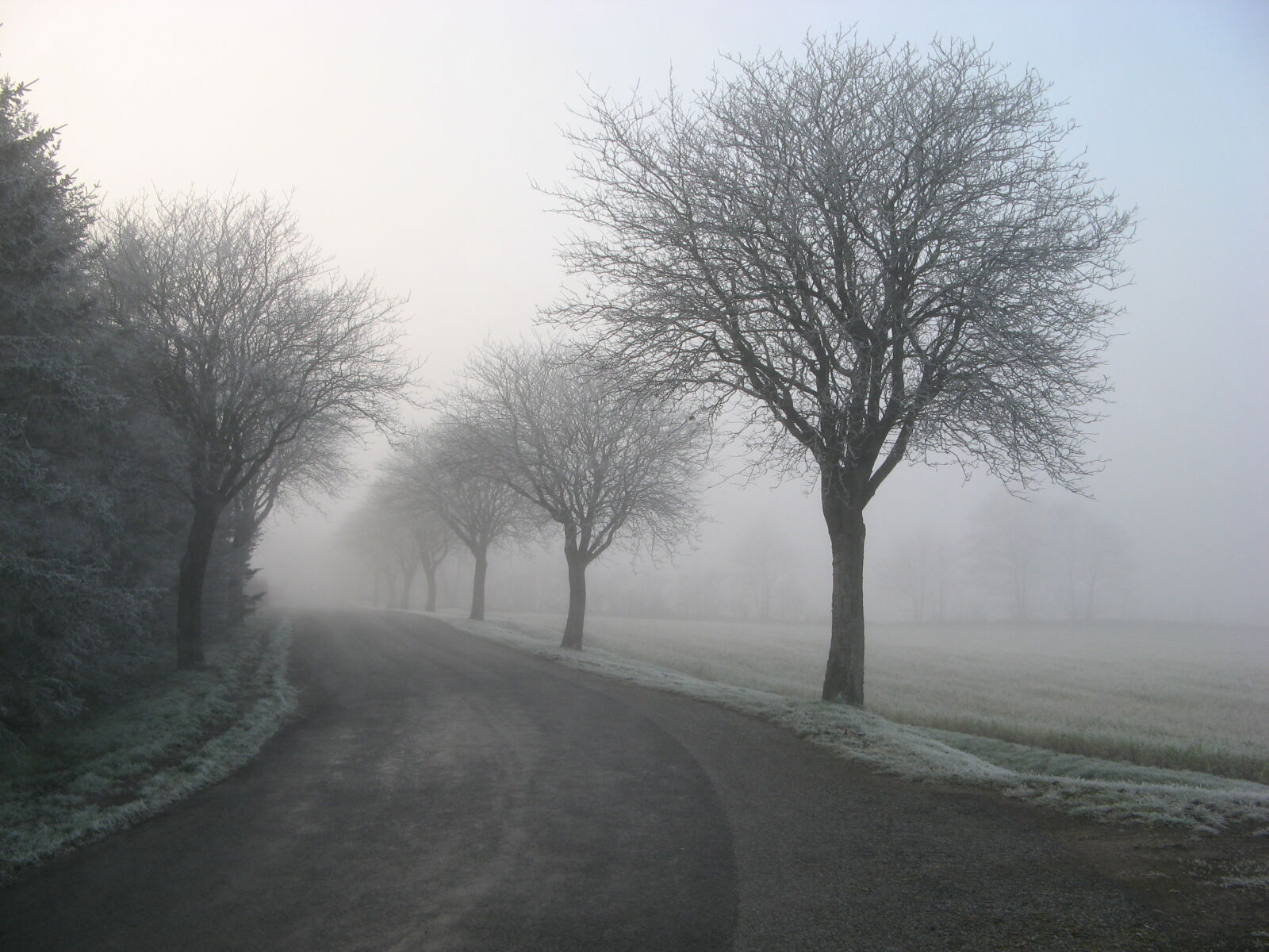 alone, cold, countryside, fog