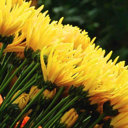 nature, flower, flora, Fujifilm X-E1