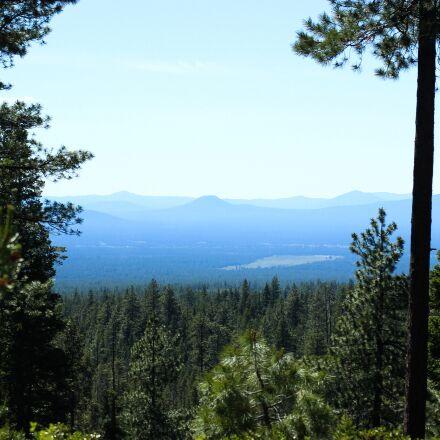 forest, oregon, nature, Canon EOS REBEL SL1