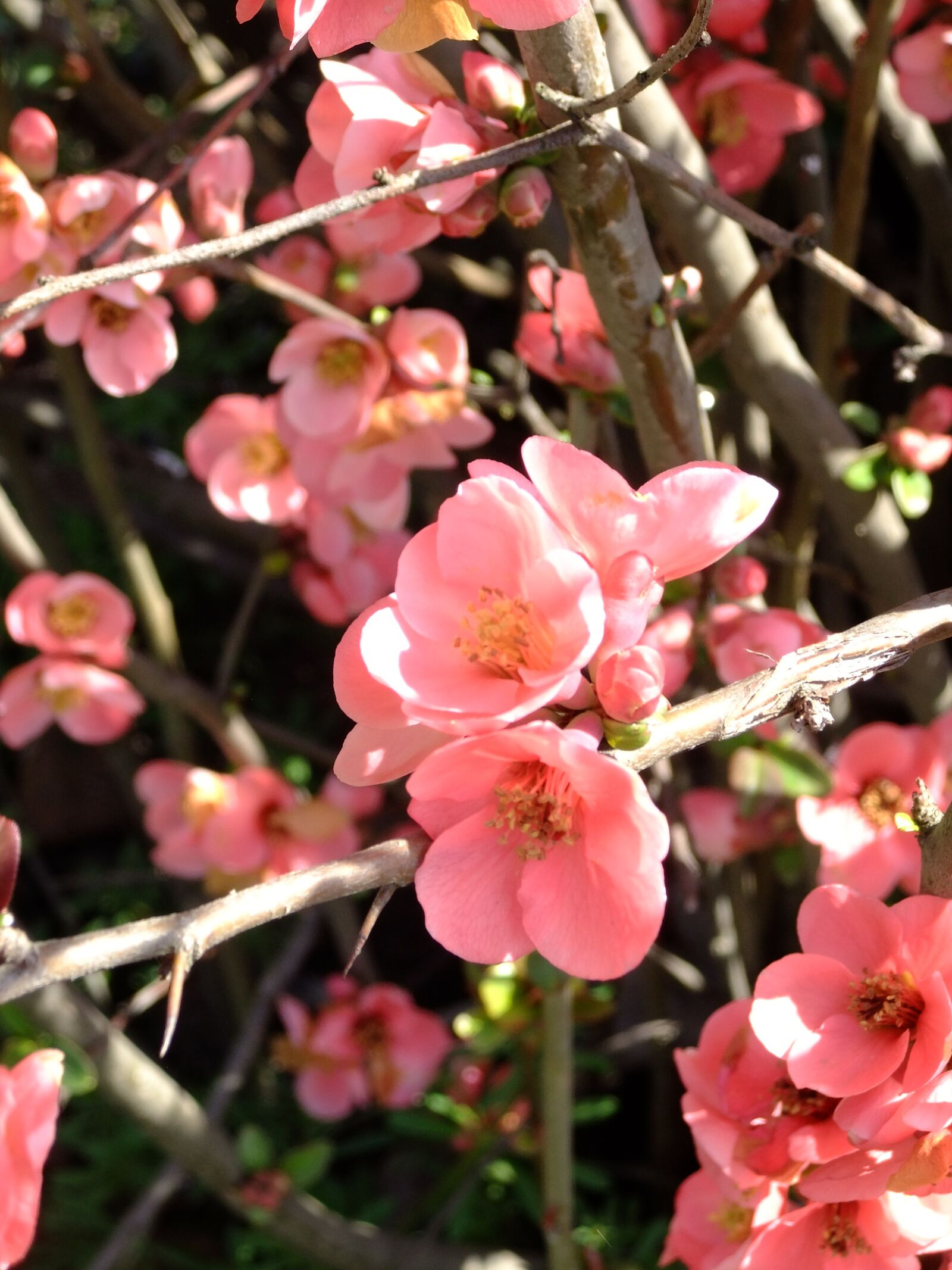 "FujiFilm FinePix JZ500 (FinePix JZ505) sample photo. ""Nature, pink, garden"" photography"