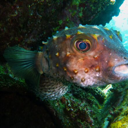 diving, underwater, water, Panasonic DMC-TZ6