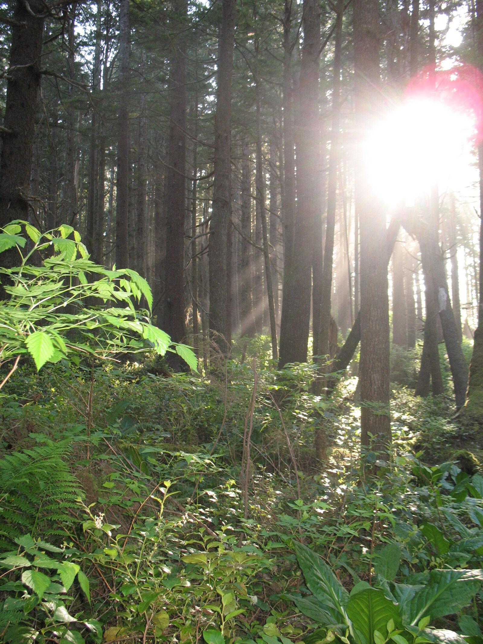 "Canon POWERSHOT A620 sample photo. ""Forest, northwest, pnw"" photography"