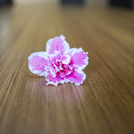 floweers and table, backround, Canon EOS 5D MARK III