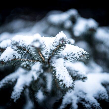 blur, branch, christmas, Fujifilm X-Pro1