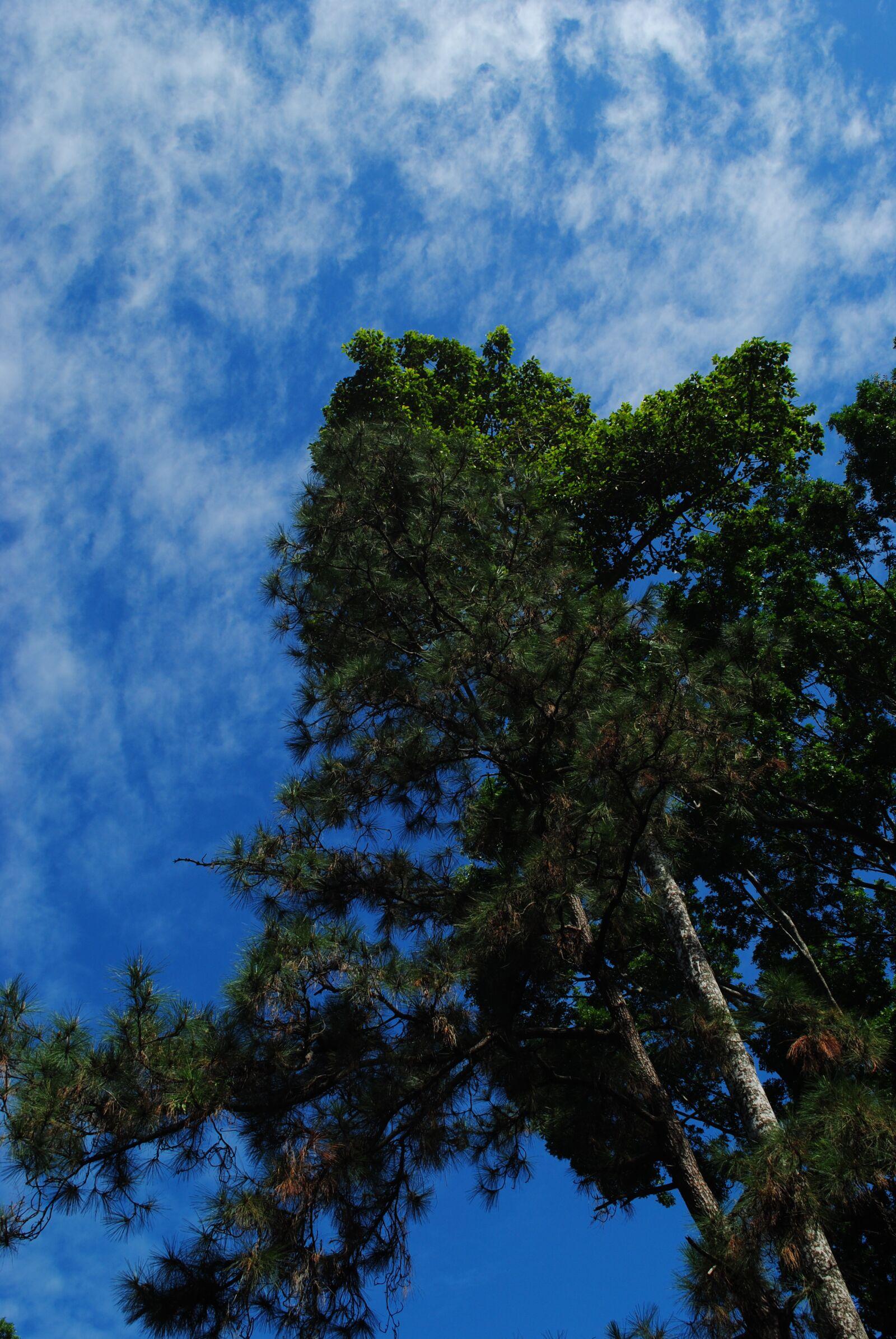 "Nikon D3000 sample photo. ""Forest, nature, sky"" photography"