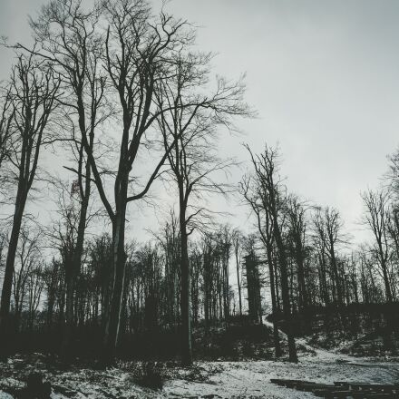 forest, dark, bare, Canon EOS 5D MARK IV