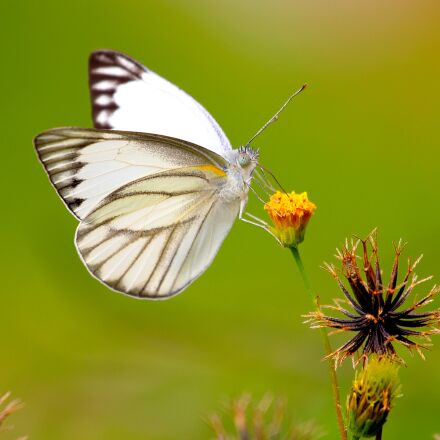 butterfly, bug, insect, Canon EOS 60D