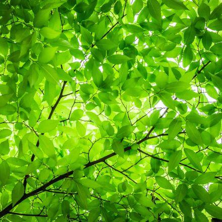wood, the leaves, twig, Sony NEX-5N