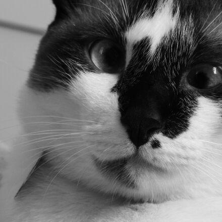cat, gata, squinting cat, Nikon COOLPIX L830